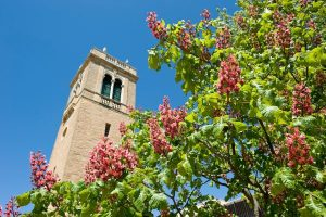 Photo of blooming trees in front of Carillon Tower