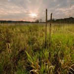 Grasses in a prairie